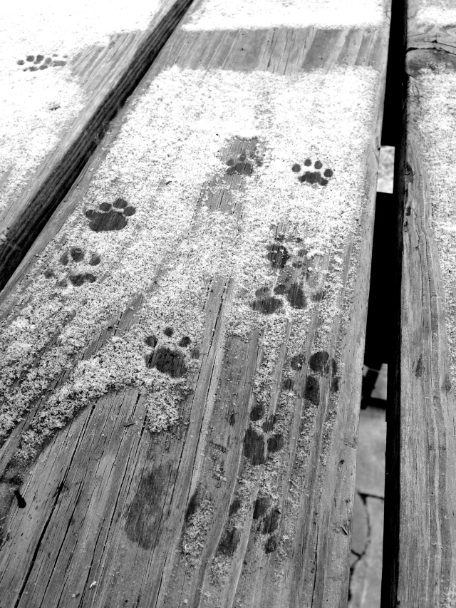 cutest little paw prints outside my porch