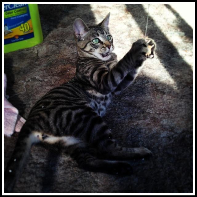 she's a jungle cat!!!!!