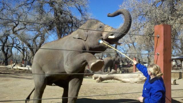 elephant-640x360
